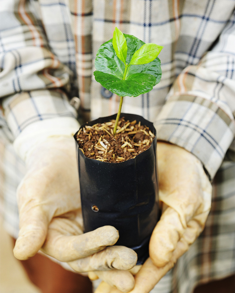 plantarea